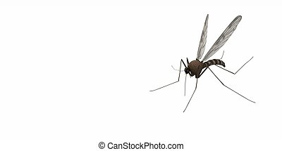 misquito fly - 3d render of mosquito fly