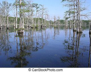 Mississippi Black Bayou April 2003 - Reflection of cypress...