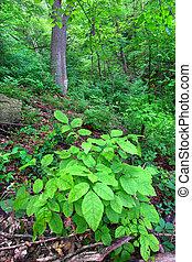 Mississippi Palisades Forest