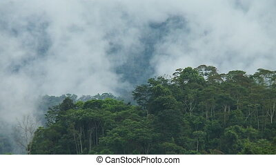 Mist and Clouds Engulf Trees - Steady, medium wide shot of...