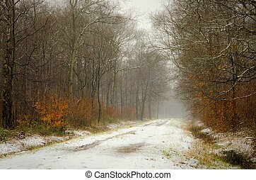 Mist and snow in woodland near ashford Kent