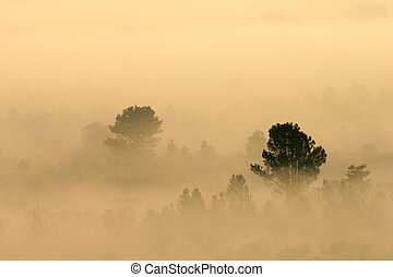 mist, bomen