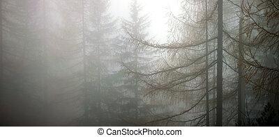 mist, bos, diep