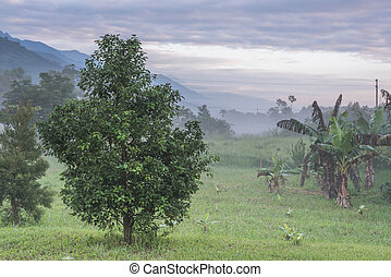 mist countryside landscape