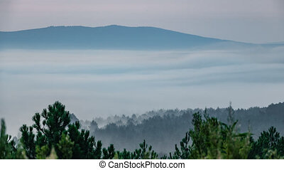 Mist dancing at dawn, long distance shot - Forest and...