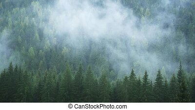 Mist drifts over treetops of this temperate rainforest in timelapse over the Carpathian Mountains