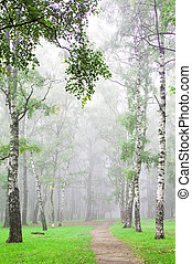 Mist in autumn birch grove early morning