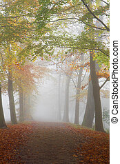 Path with beechtrees in dense fog