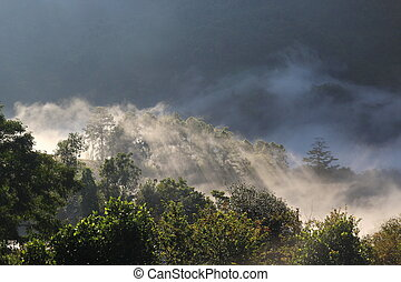 mist in forest , Chiang Mai