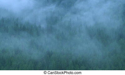 Mist in the Forest 02