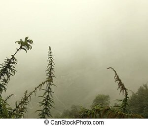 Mist in the the Pastaza Valley, Ecuador - In the Ecuadorian...