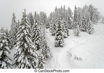 Mist in winter mountain forest