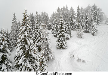 Mist in winter mountain forest