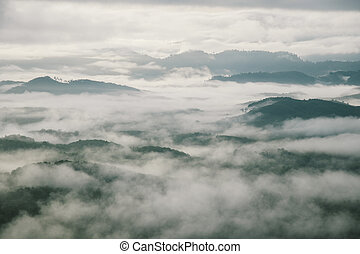 mist morning over forest at Thailand