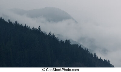 Mist Moves Over Forest Mountainside - Atmospheric scene with...