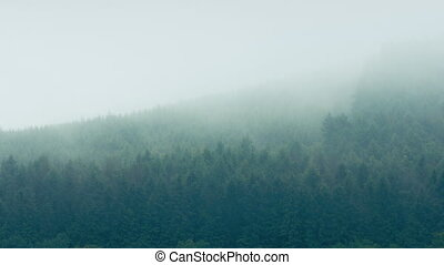 Mist Moves Over Mountain Forest
