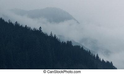 Mist Moving Over Forest Mountainside - Atmospheric scene...