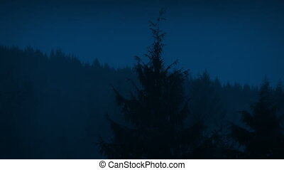 Mist Moving Over Forest Trees At Night - Thick mist over the...