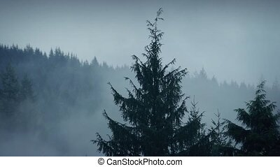 Mist Moving Over Mountainside Trees - Thick mist over the...
