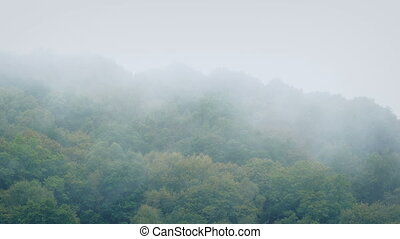 Mist Moving Over The Forest Tree Tops - Thick mist moves...