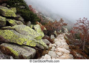 Mist on Mountain Path