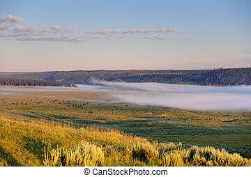 Mist over Hayden Valley