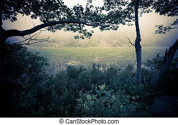 Mist over Reeds - Dark and mysterious landscape of fog over...