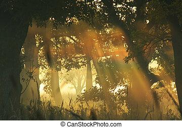 rainbow in morning fog, Homestead National Monument of America, Beatrice, Nebraska