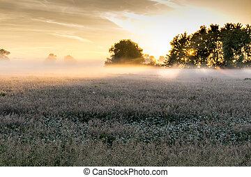 mist, reserveren, zonopkomst, natuur