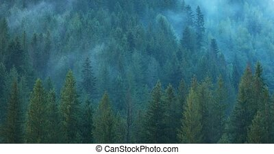 Mist Rises and Drifts Away from the Forested Carpathian ...