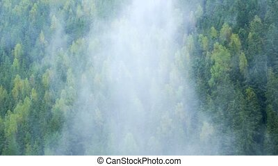 Mist Rises and Drifts over Temperate Rainforests of ...