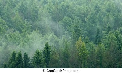 Mist Rising From Wilderness Forest