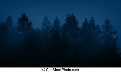 Mist Shrouds Forest Trees At Night - Thick mist shrouds tall...
