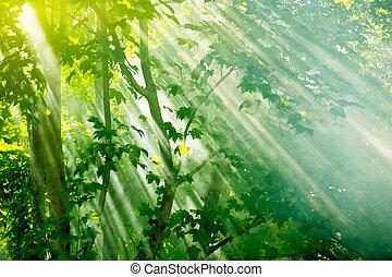 mist sunbeams through trees in fairy forest