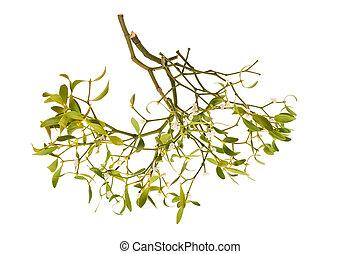 mistelten, branch