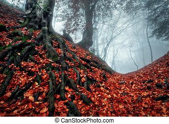 misterioso, oscuridad, bosque de otoño, en, azul, niebla, con, permisos rojos, árboles