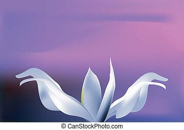 mistico, fiore blu, cielo, tramonto, pallido