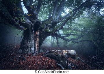 mistico, foresta autunno, in, nebbia, in, il, morning., vecchio albero