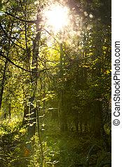 mistico, foresta nera, in, germania, con, sole