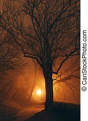 mistico, foresta, parco, scuro, e, albero, silhouette, con, uno, luce stradale