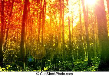 mistico, sole, foresta, raggio