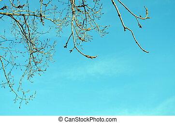 mistle, dedos del pie, árbol