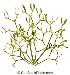 Mistletoe Leaf Sprigs