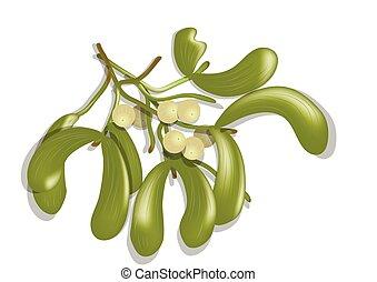 mistletoe on white