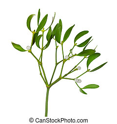 Mistletoe twig with leafs and berrys isolated on white...
