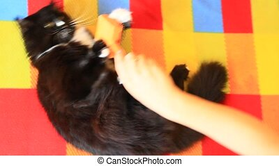 Mistress combing cat. Taking care of domestic pet