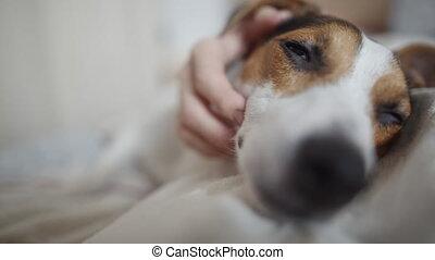 Mistress fondles the dog - Close-up portrait of happy dog...