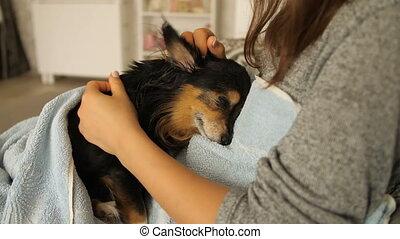 Mistress Stroking Small Dog