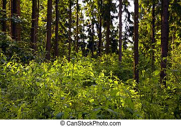 misturado, floresta