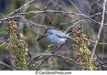 misturas, vegetation., pássaro, pequeno